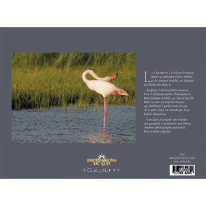 editions-equinoxe-623-impressions-du-sud-camargue-des-oiseaux-1